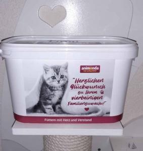 Futter BKH Kitten